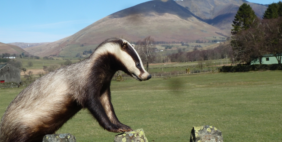 Follow Bertie the Badgers travels on Facebook